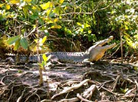 Croc spotting on Cooper Creek or the Daintree river
